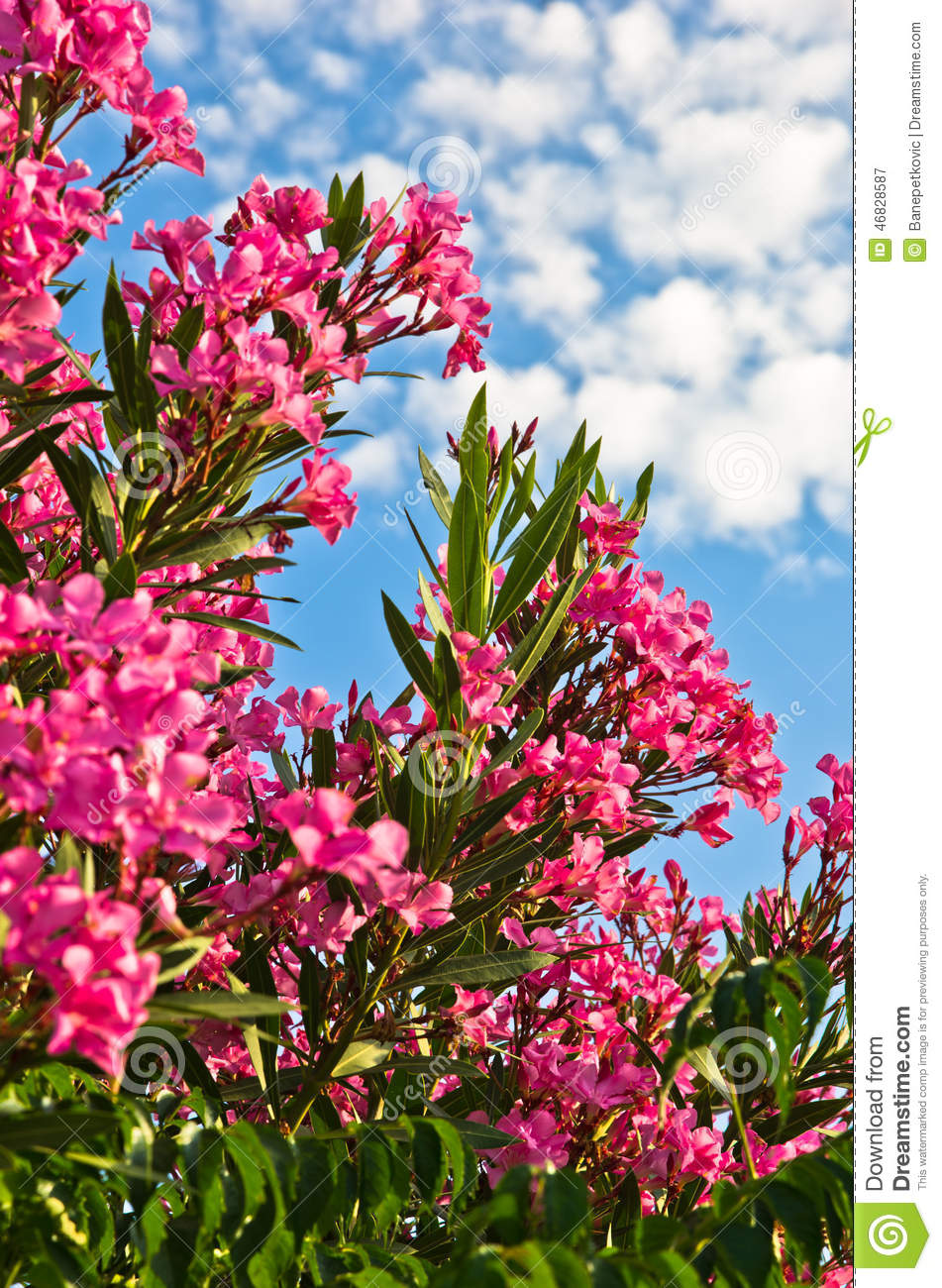 Colorful mediterranean flowers at sunny morning stock image image colorful mediterranean flowers at sunny morning mightylinksfo