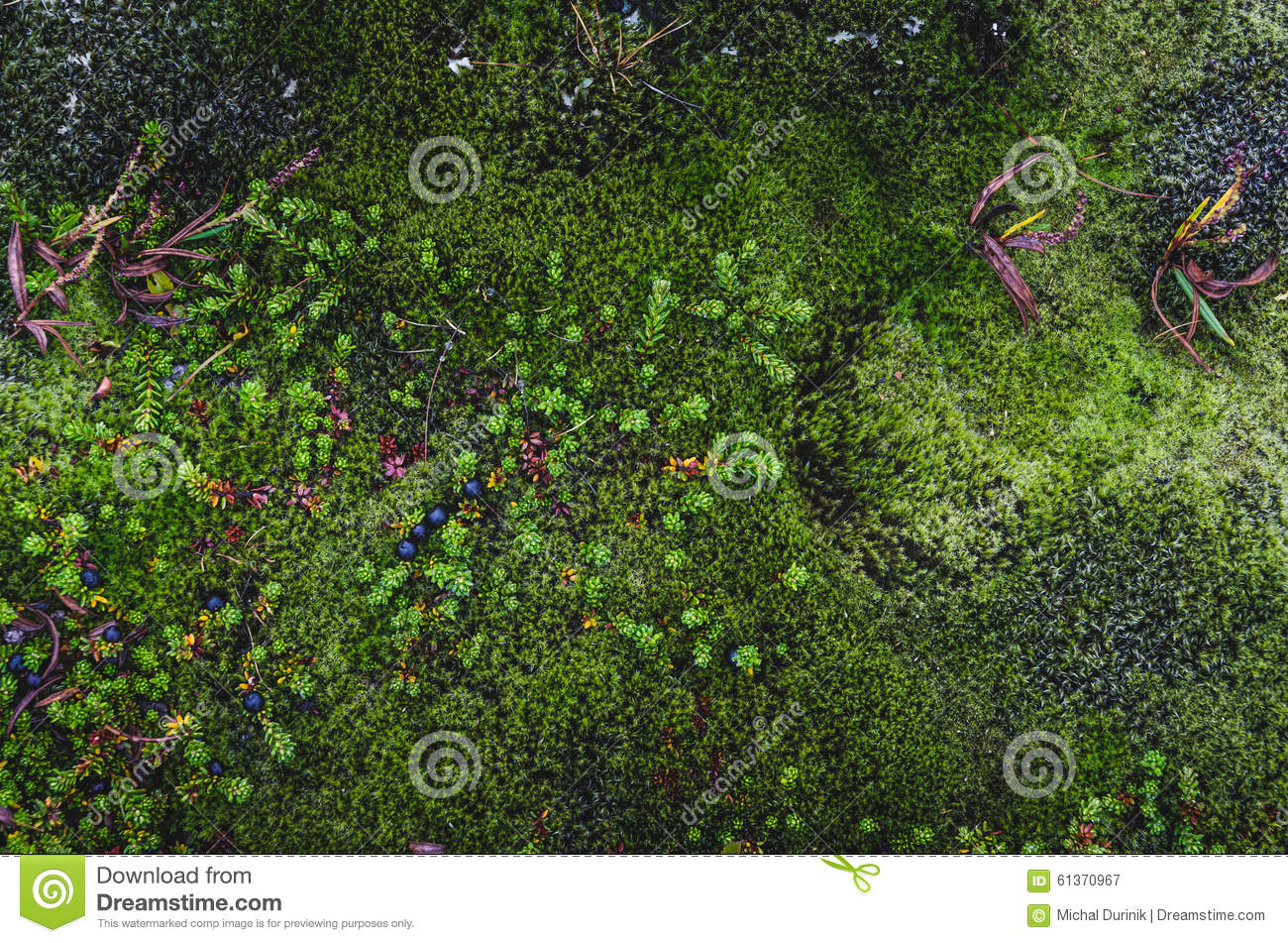 Colorful moss textures