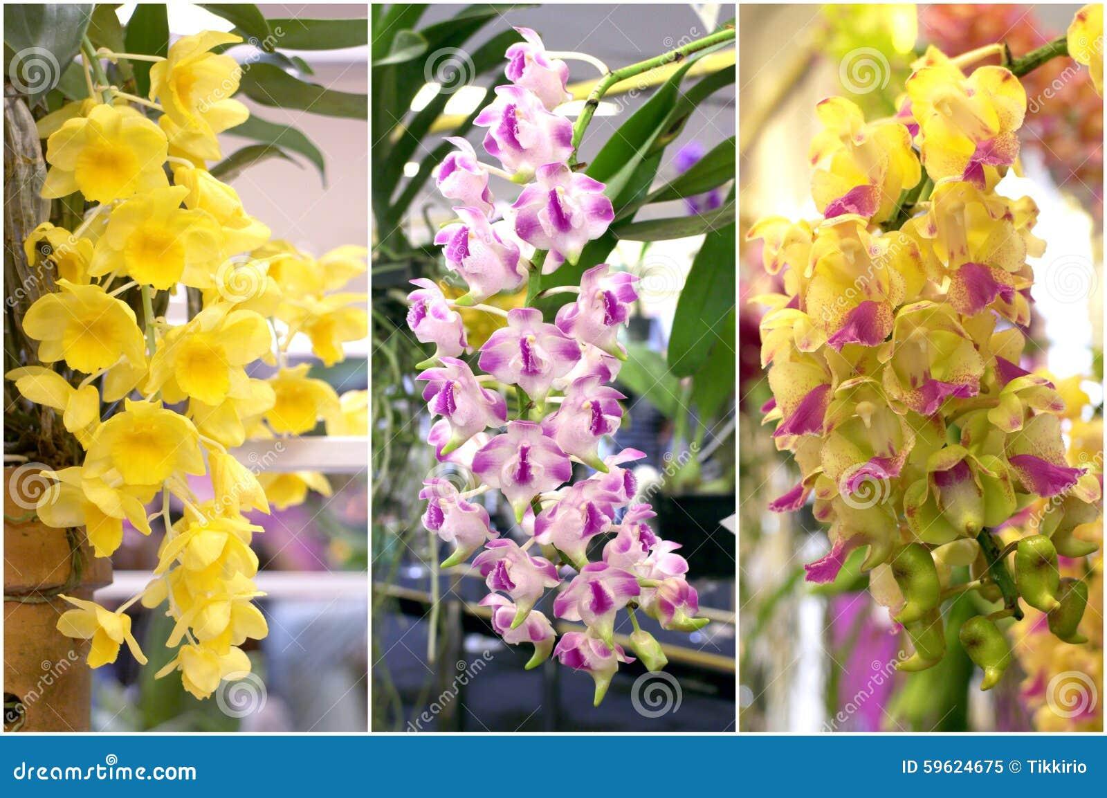 Colorful orchid bouquet