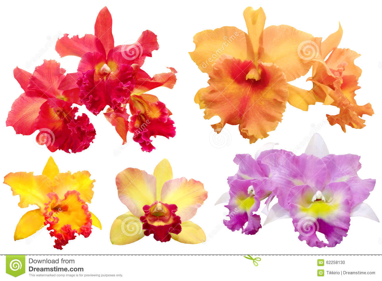 Colorful orchid isolated with Clipping Paths