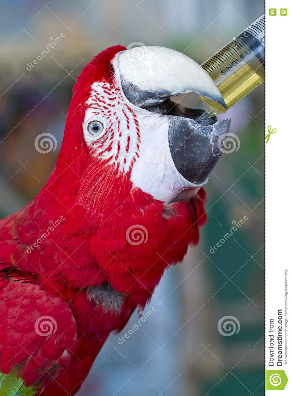 Colorful parrot bird,Green and red macaw