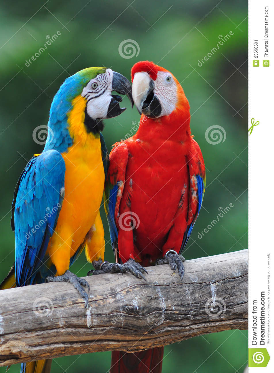 Stock Image Colorful Parrot Love Bird Macaw Image23698691