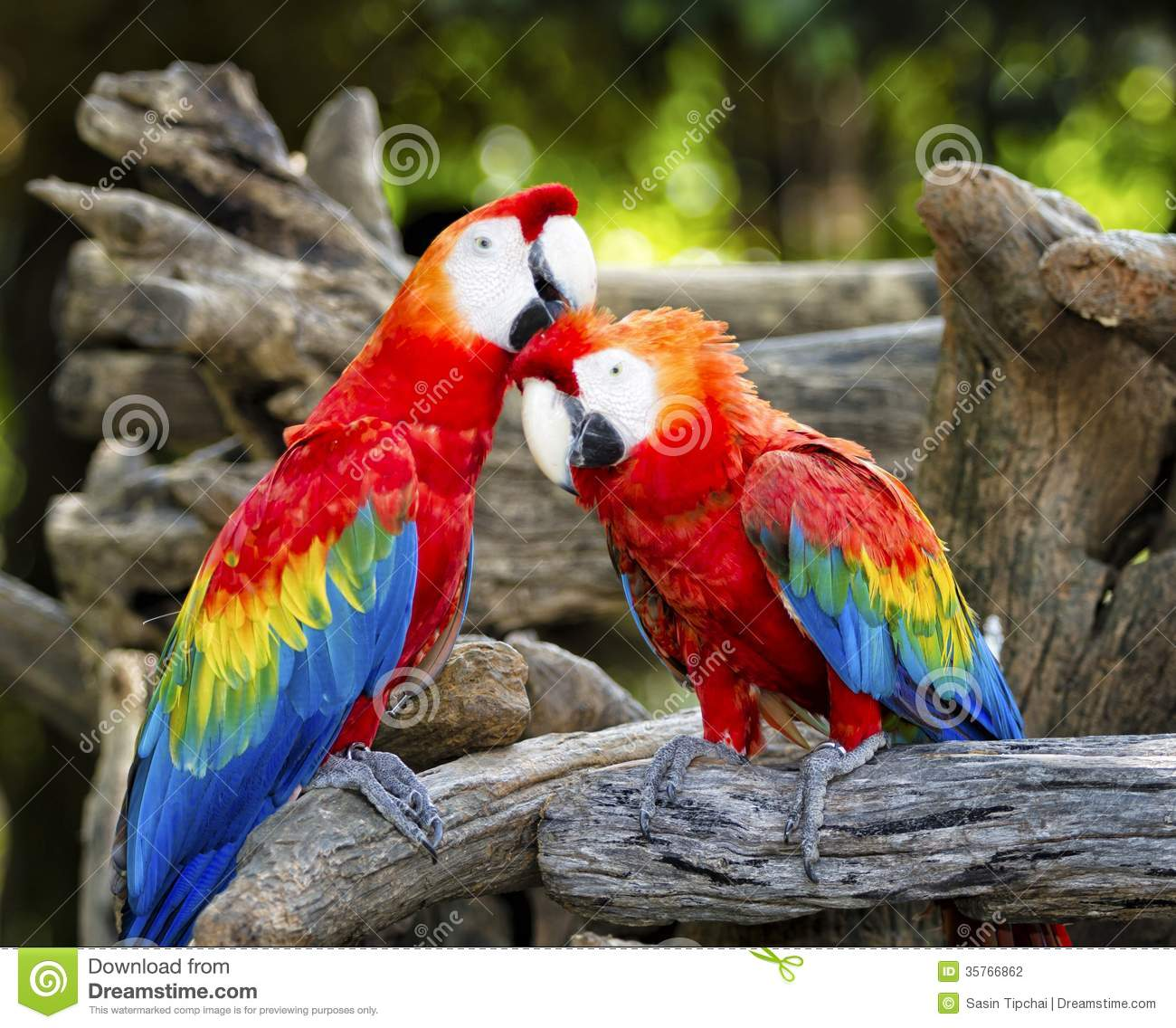 Colorful Parrot Macaws...