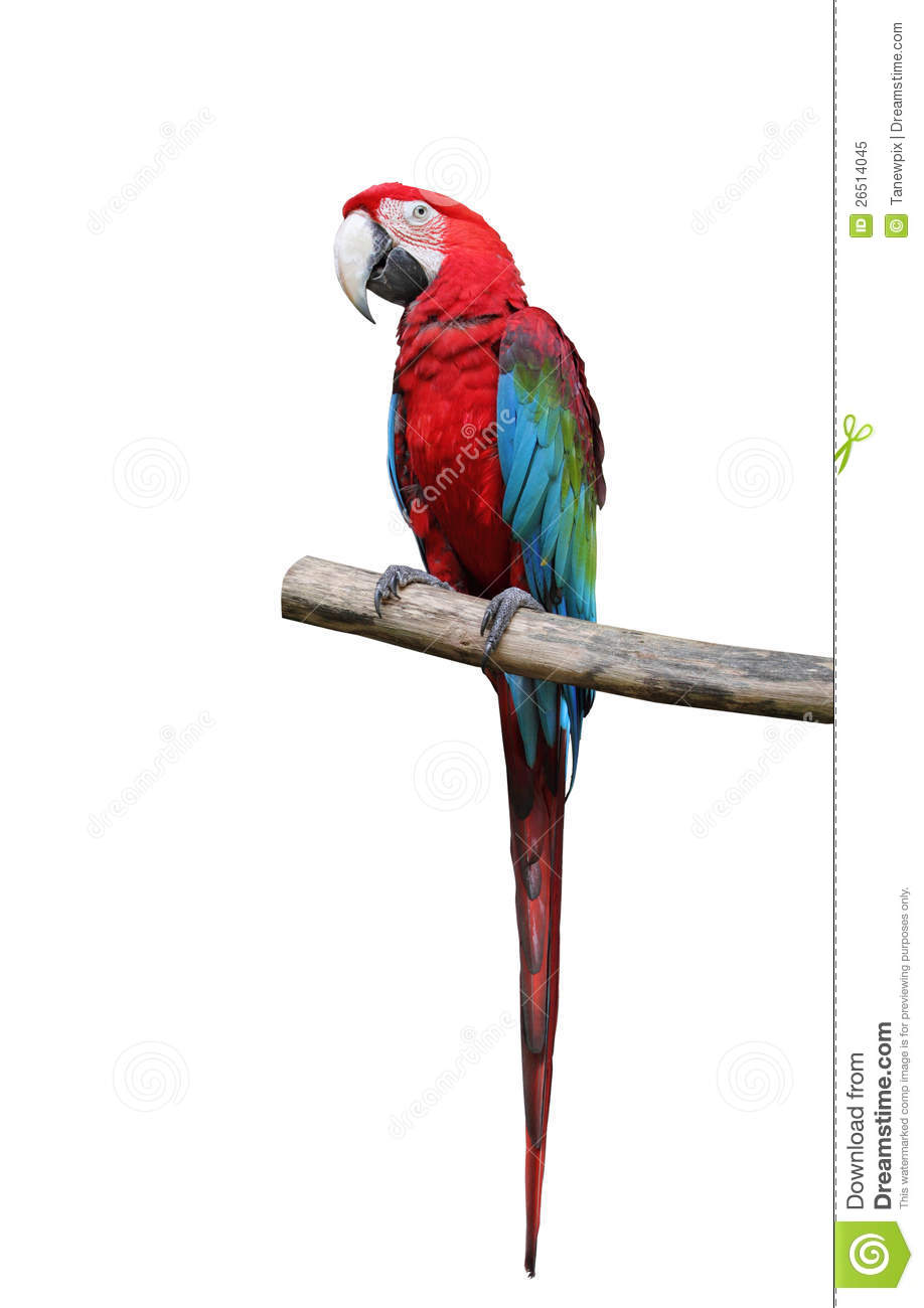 Colorful Parrot Saying. Royalty Free Stock Photo - Image: 26514045 Quail Black And White Clipart