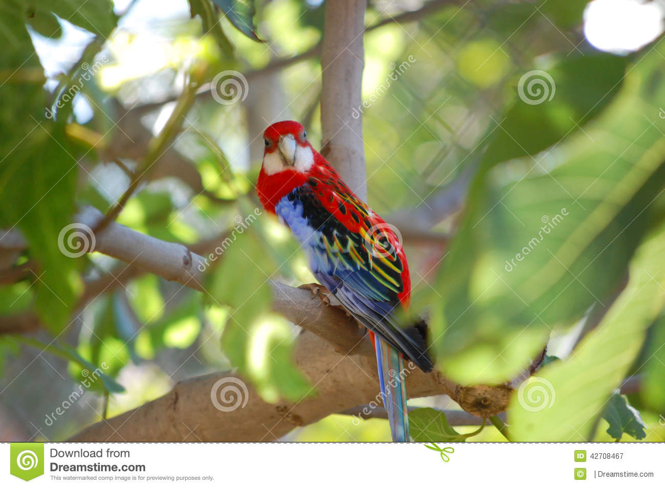 Colorful parrot on a tree