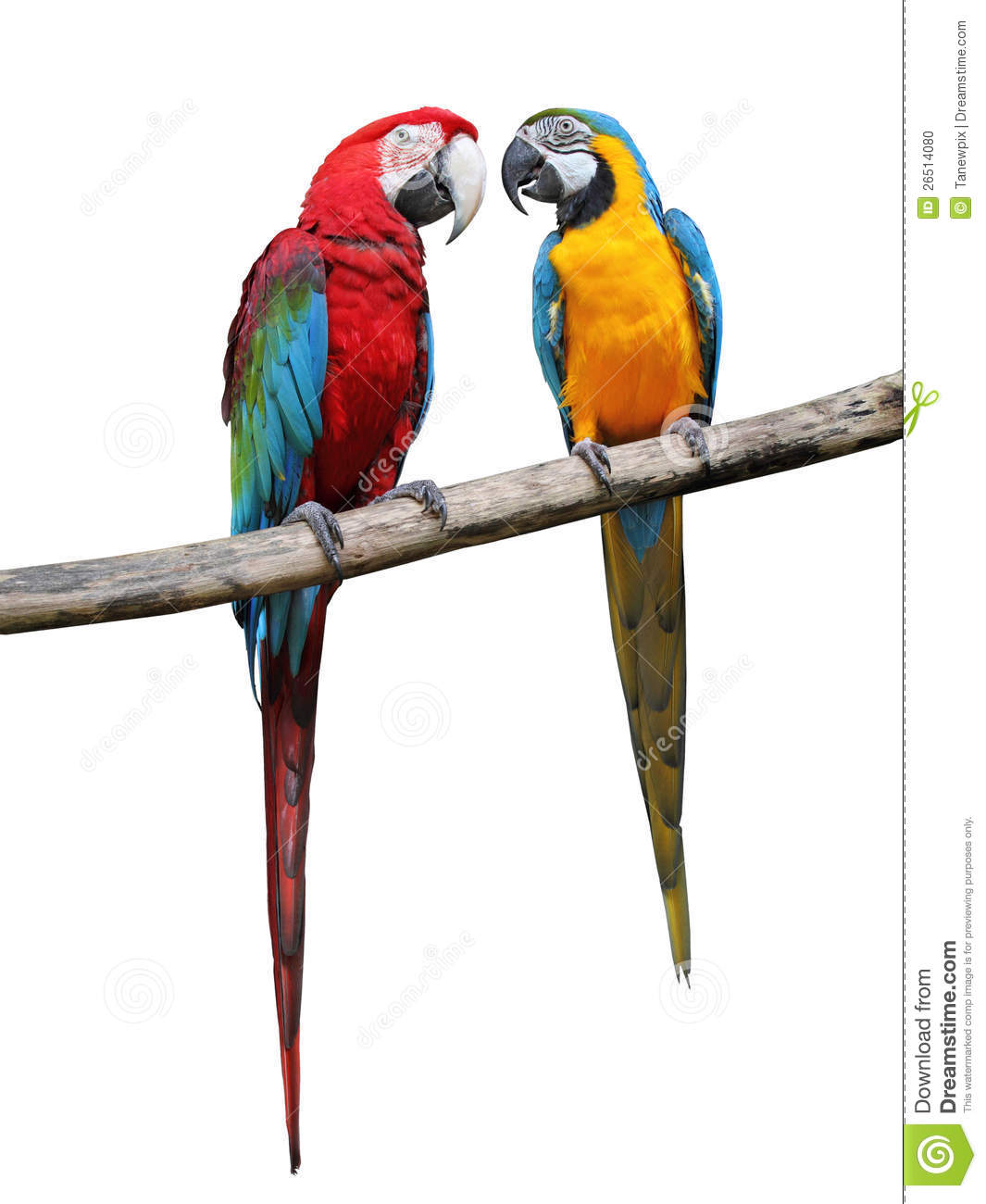 More similar stock images of ` Colorful parrots saying. `