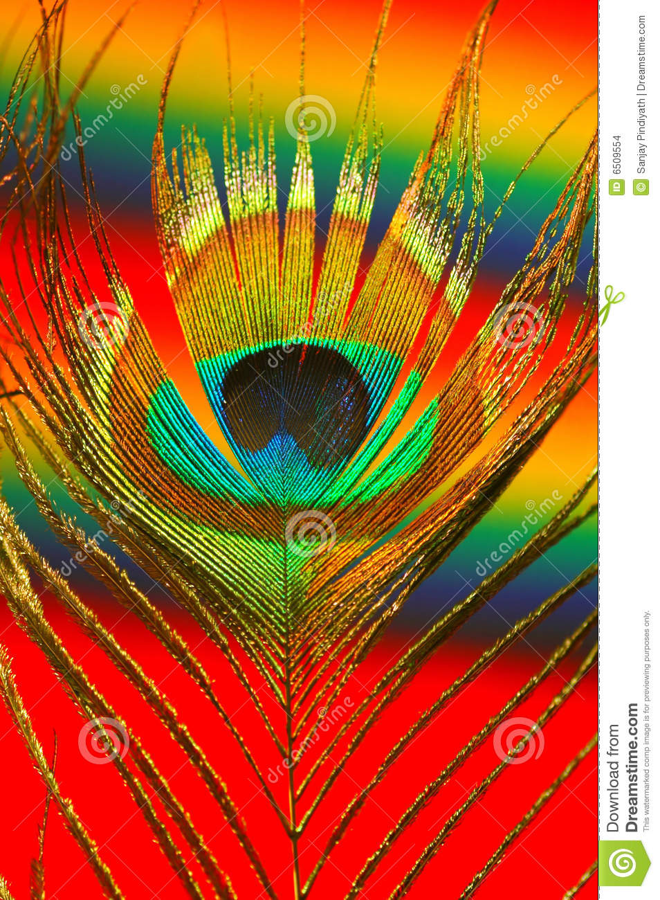 Interior wallpaper texture - Colorful Peacock Feather Stock Images Image 6509554