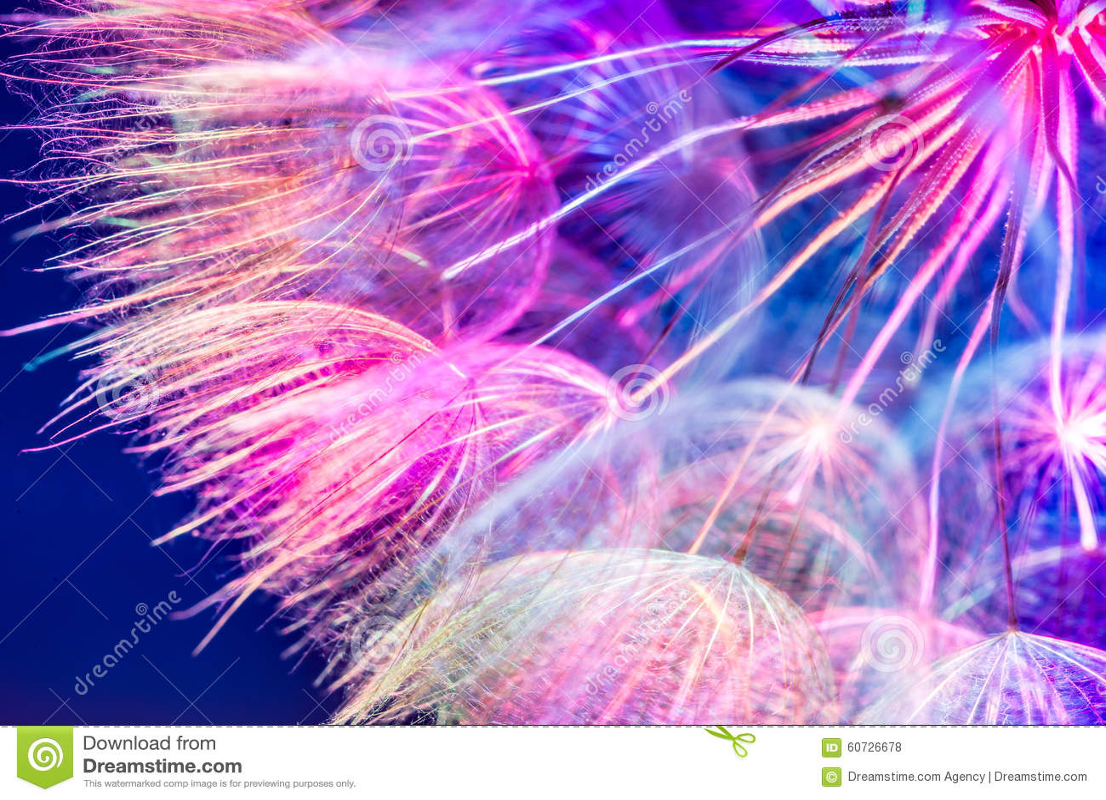 Colorful Pink Pastel Background - vivid abstract dandelion flowe