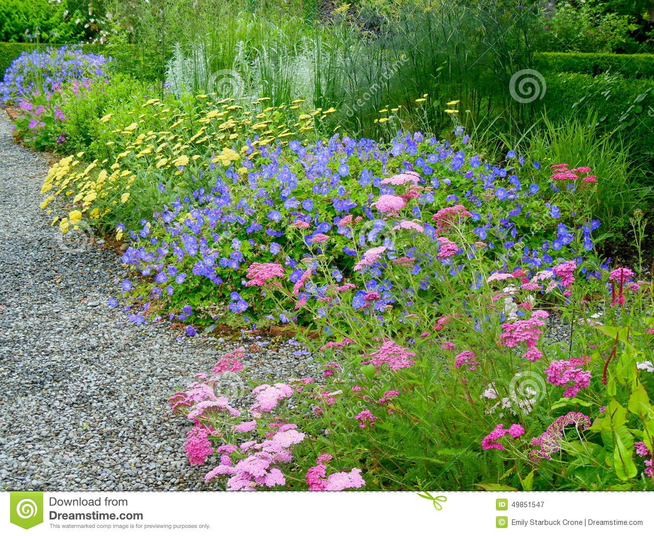 Colorful Pink Purple And Yellow Flowers In A Garden Stock Image