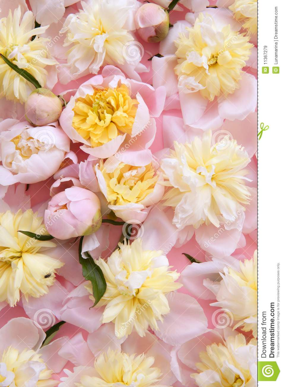 Colorful Pink And Yellow Flowers Background Stock Image Image Of