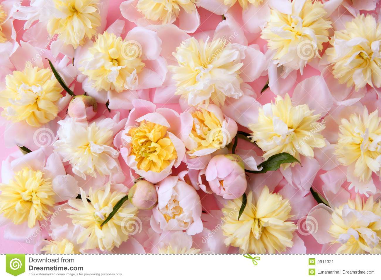 Colorful Pink And Yellow Flowers Background Stock Image ...