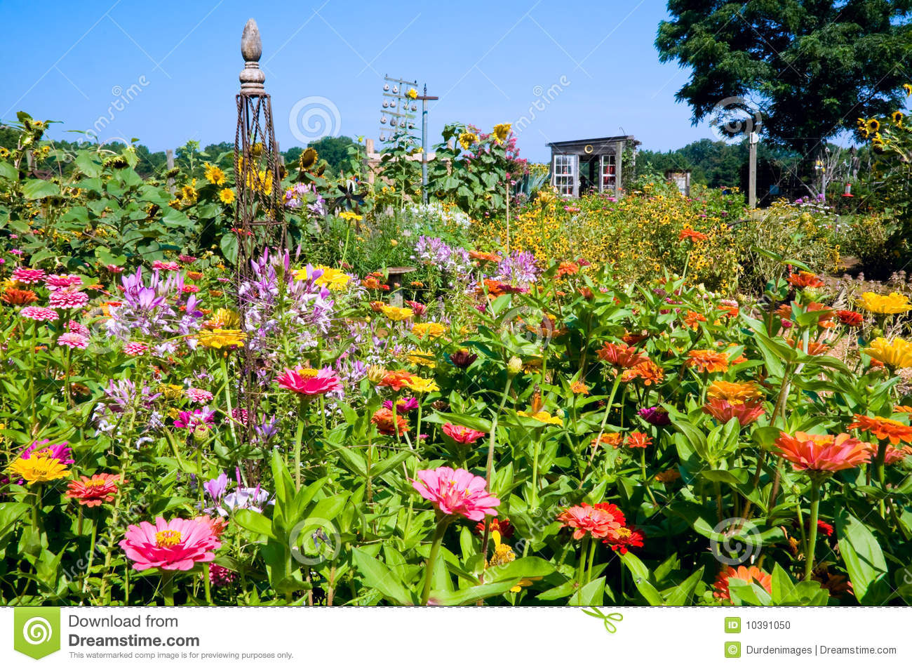 Colorful Prolific Garden Stock Photo Image Of Flowering