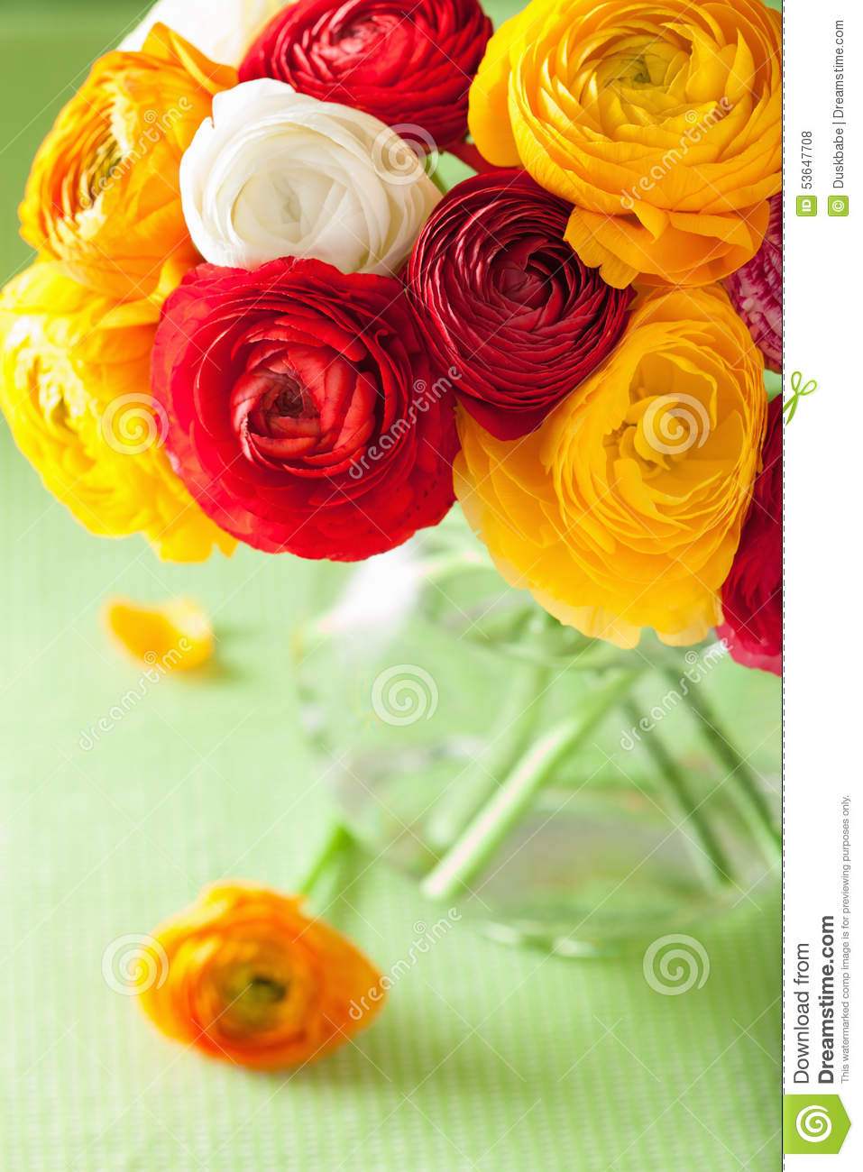 Colorful Ranunculus Flowers In Vase Over Green Background Stock ...