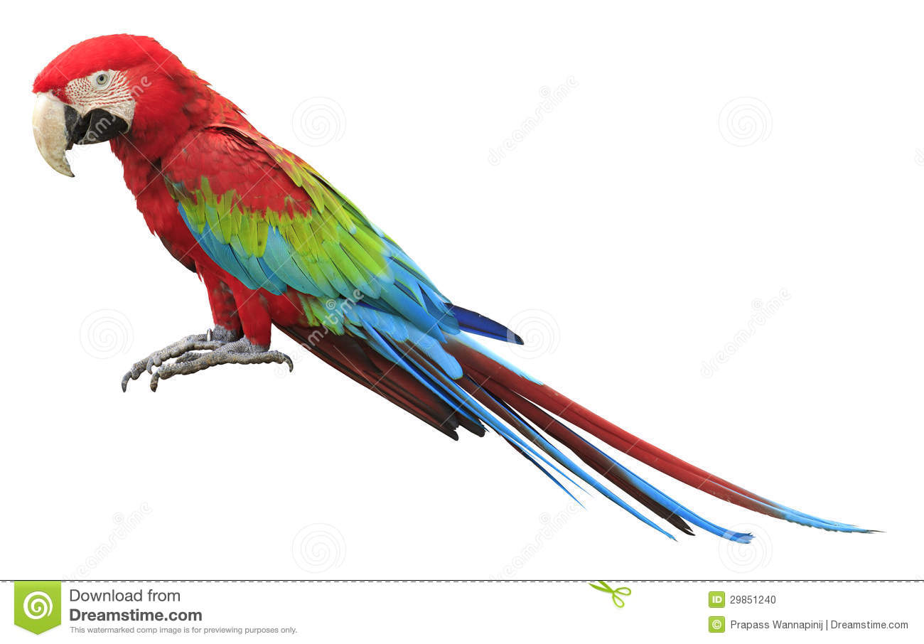 colorful red parrot macaw stock photo image 29851240 macaw clipart black and white macaw clip art color