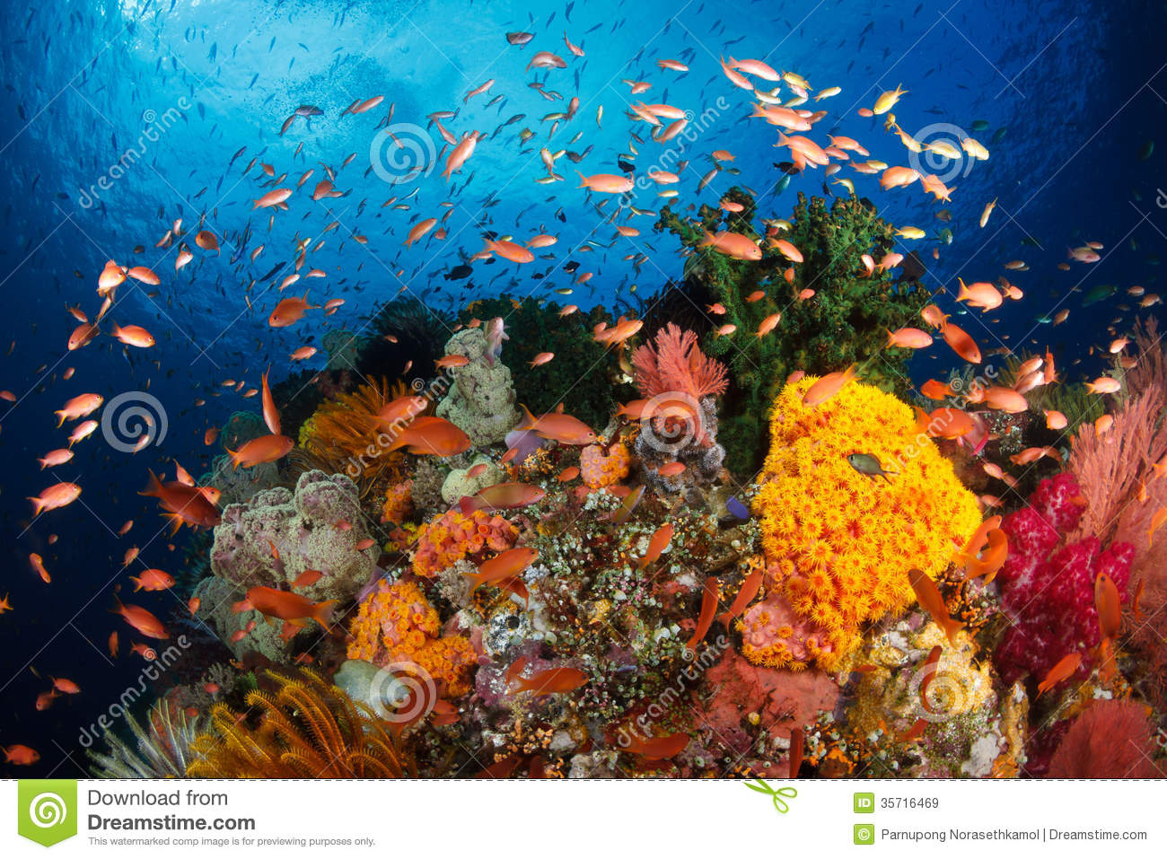 the current status of indonesias coral The legal status of any country,  is devoted to the effects of tourism on culture and the environment in nepal  current government policy pertaining to tourism.