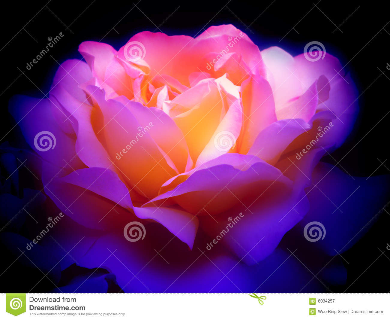 Colorful Rose In The Dark Royalty Free Stock Photography - Image ...
