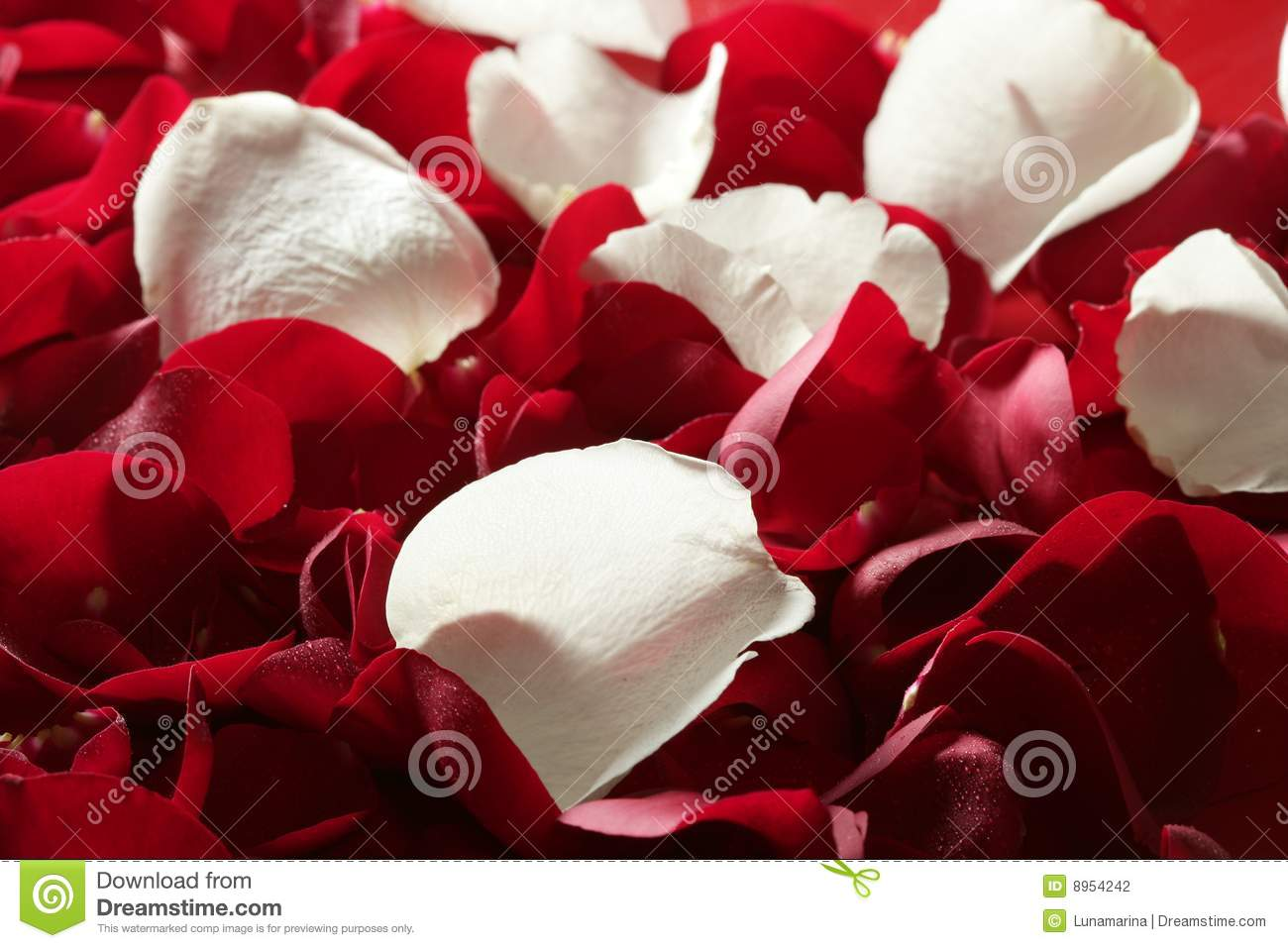 Colorful Rose Petal Pattern Wallpaper Texture Stock Photo
