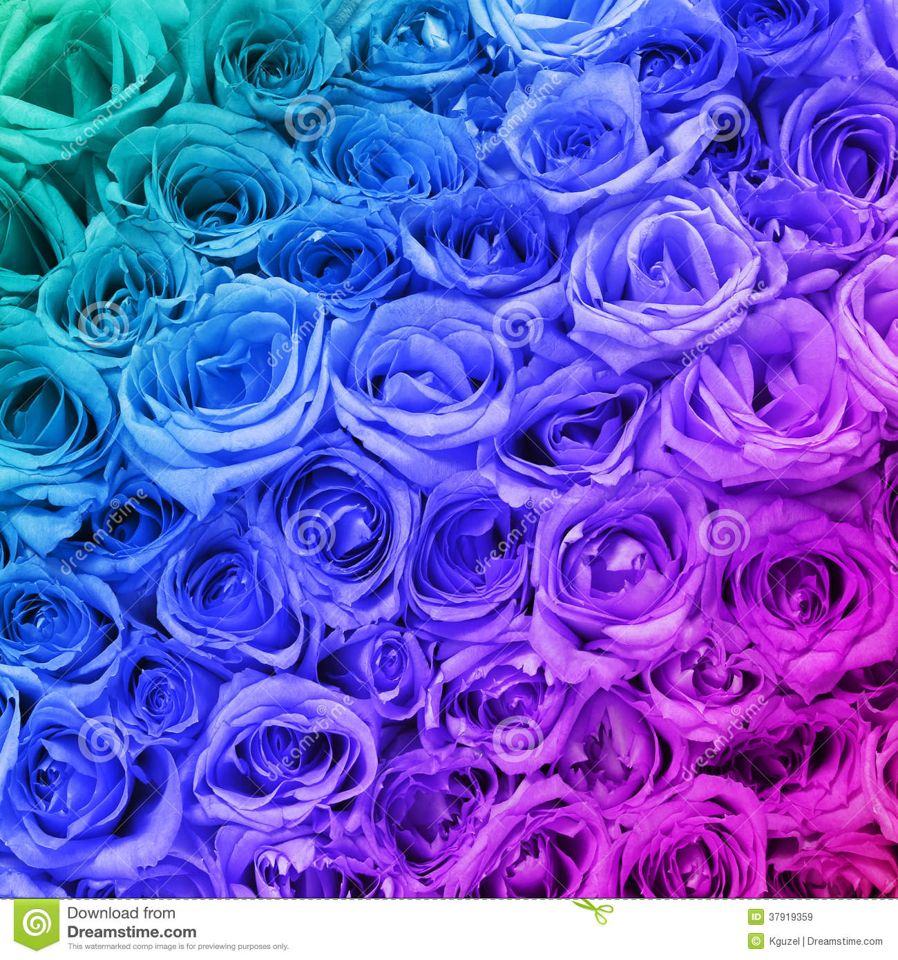 Colorful roses background royalty free stock images for Colorful roses images