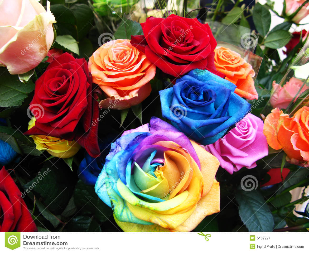 Colorful Roses In Bloom Stock Image Image Of Angle