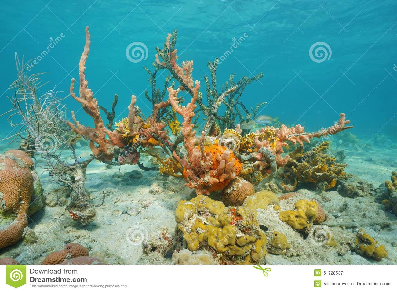 ANDHRA PEOPLES BEAT: COLORFUL MARINE LIFE OF INDONESIA |Colorful Underwater Life