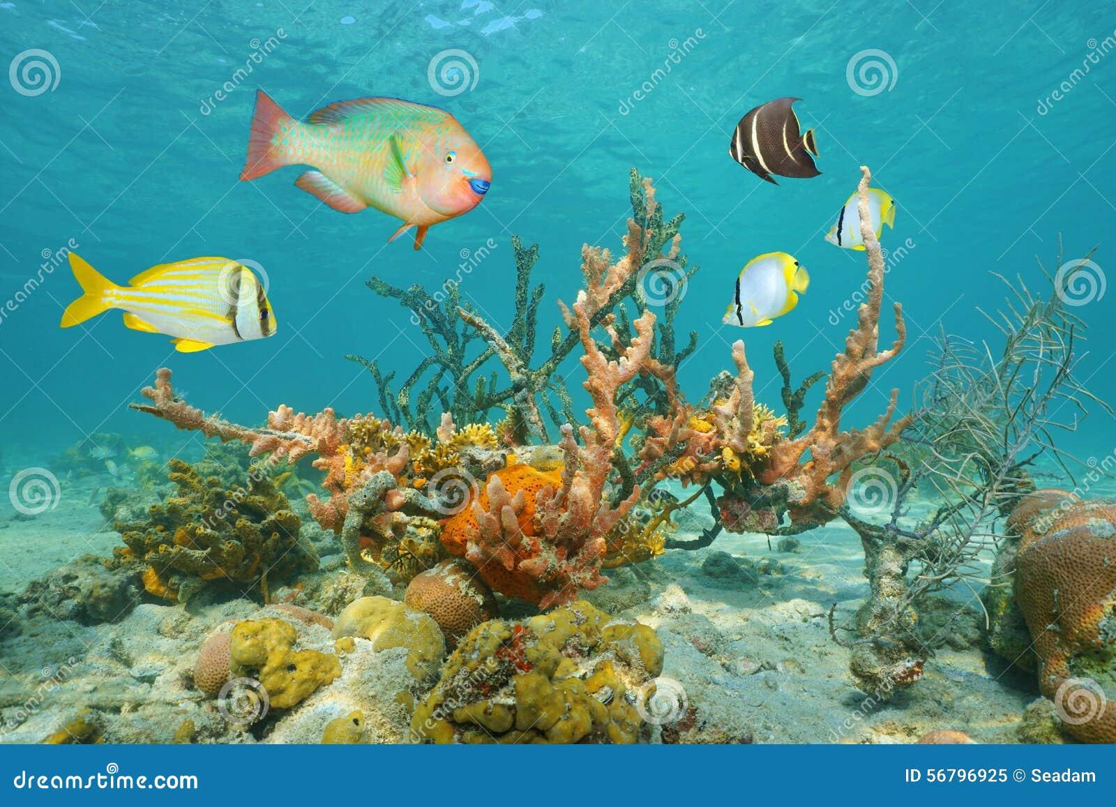 Colorful Marine Life Stock Image - Image: 29798251 |Colorful Underwater Life
