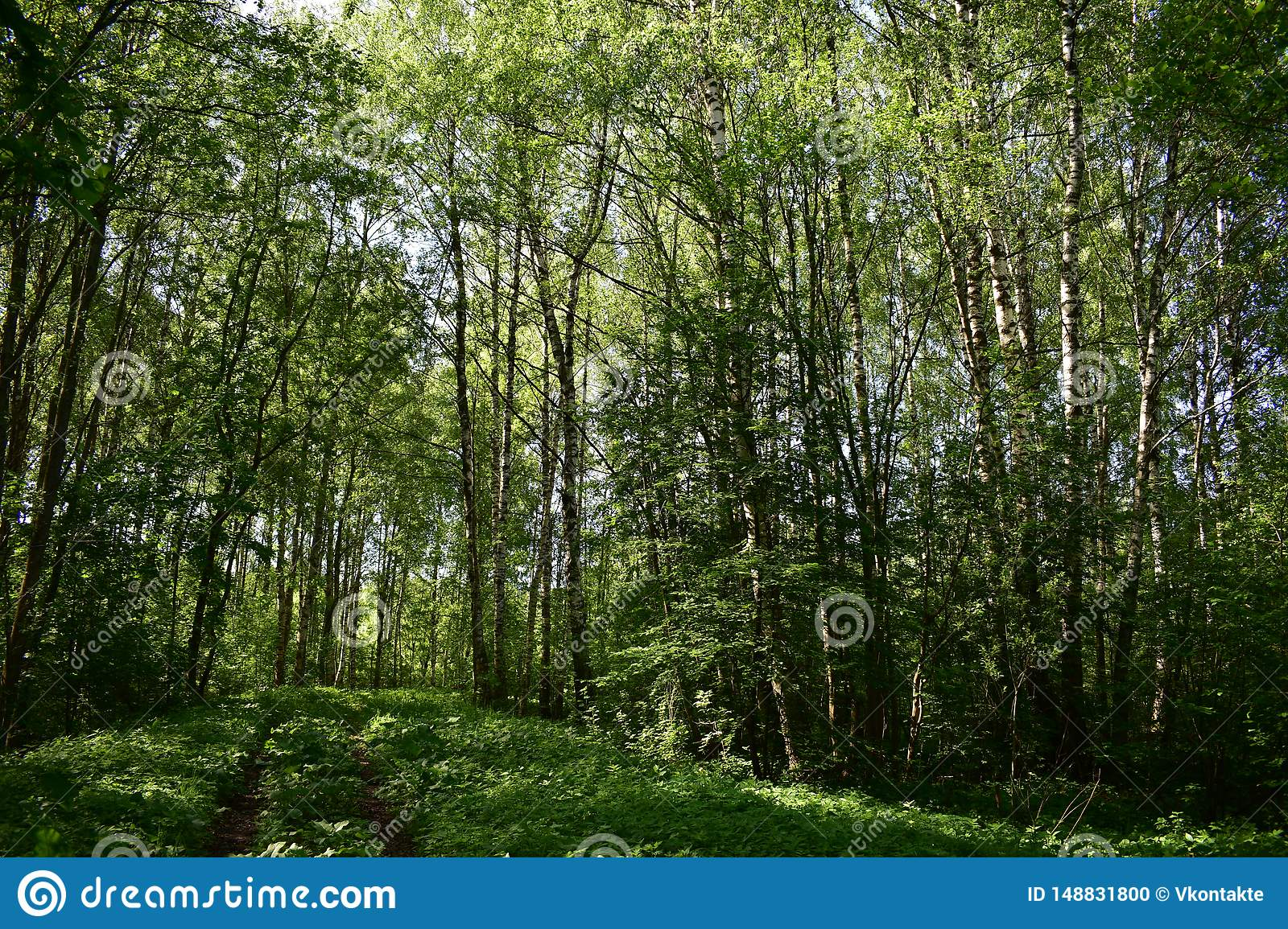 Colorful shady forest clear noon, bright sunlight, summer