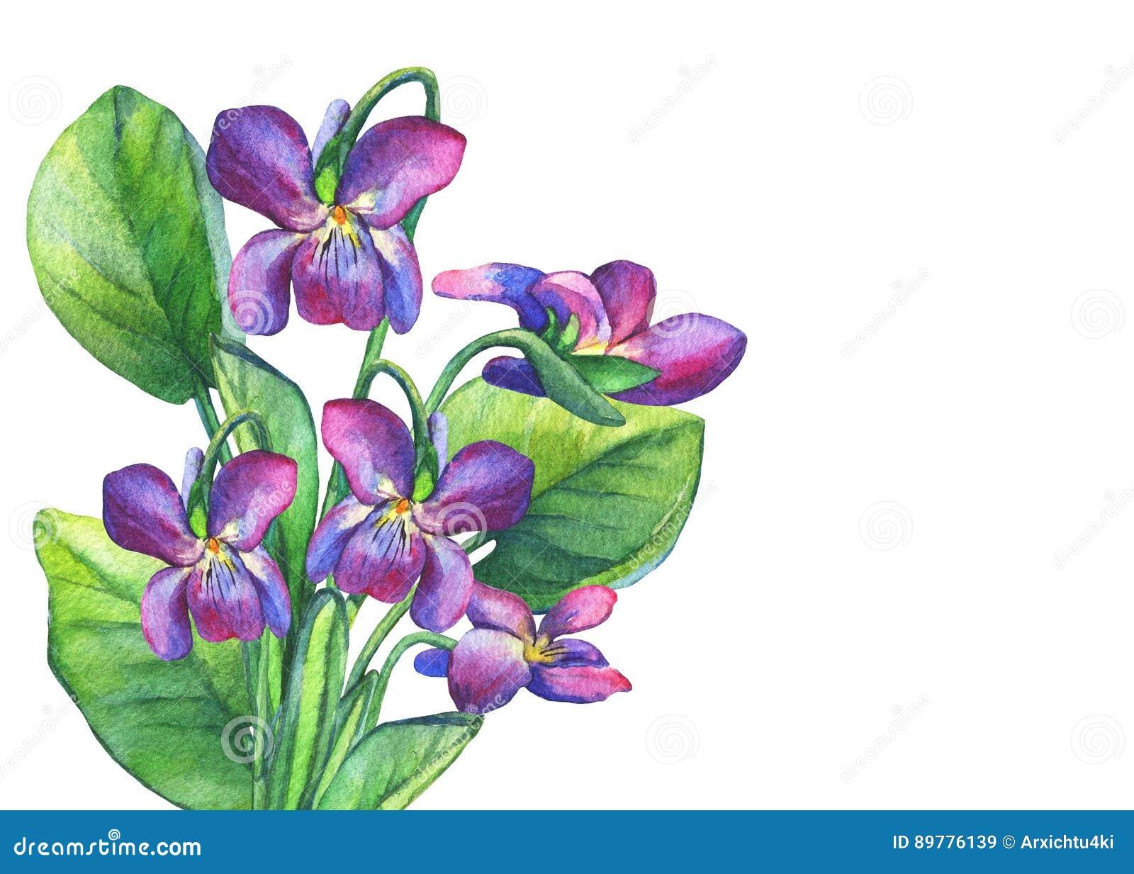 Colorful spring flowers Fragrant violets English Sweet Violets, Viola odorata.