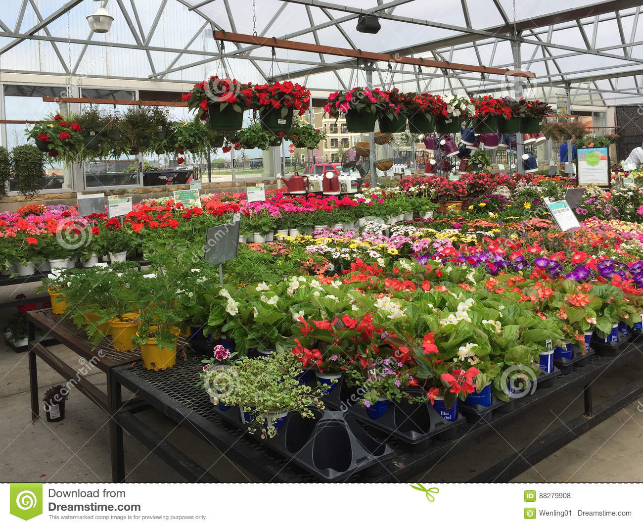 Colorful Spring Flowers On Shelves For Sale Editorial Stock Photo