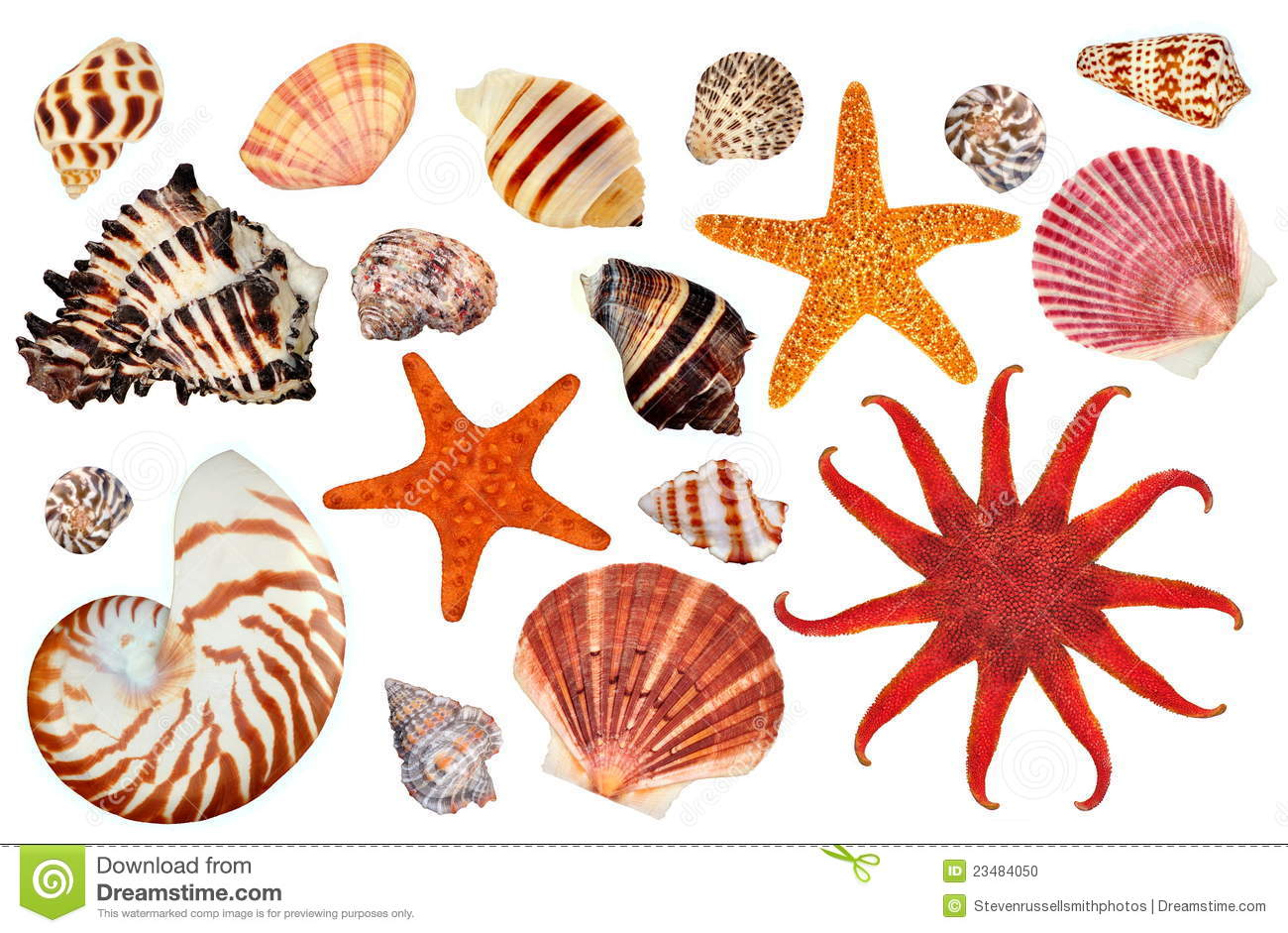 Colorful Starfish And Seashells Stock Photo - Image: 23484050