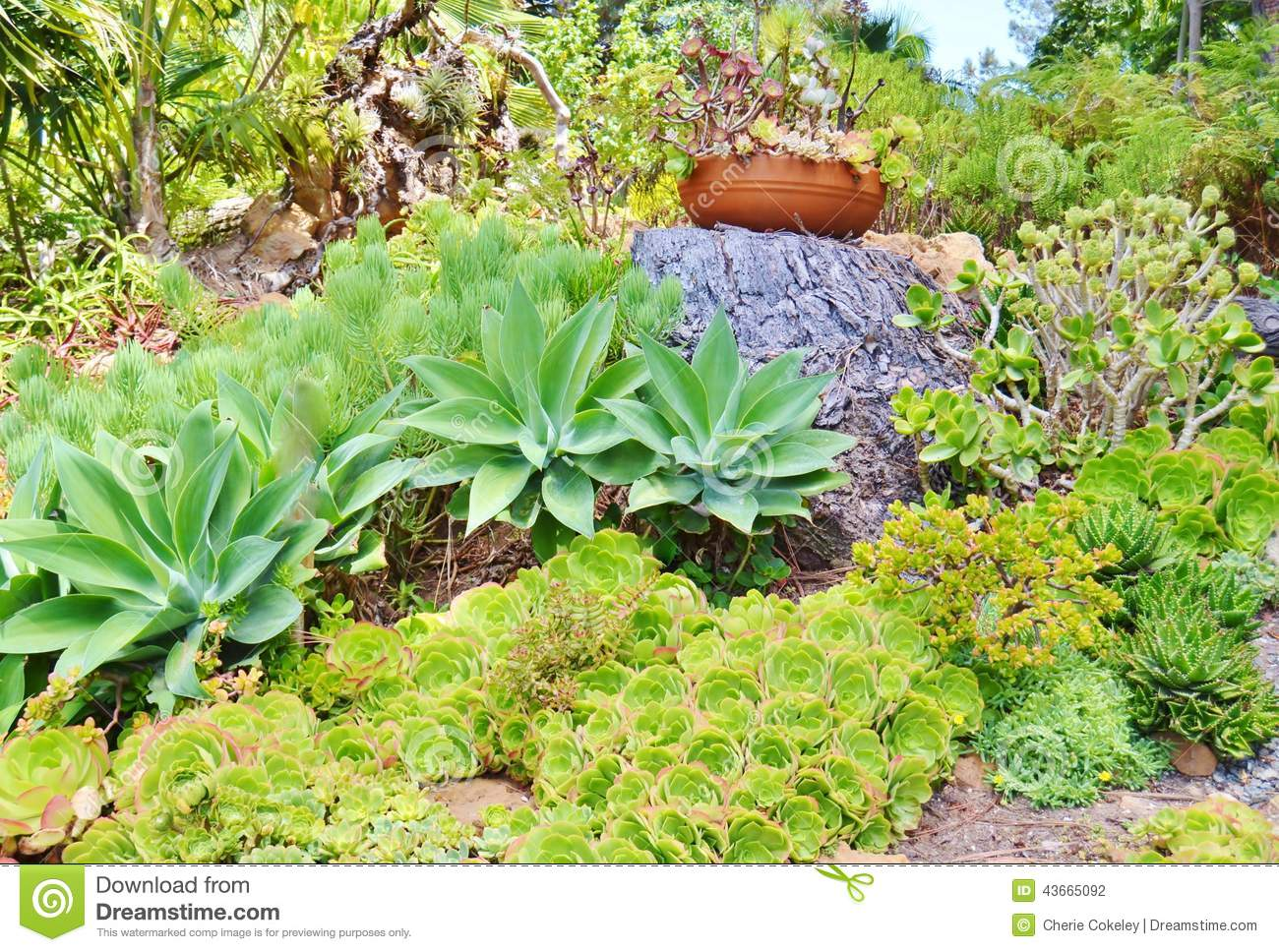 Colorful Succulent Garden And Ceramic Potted Plant Stock