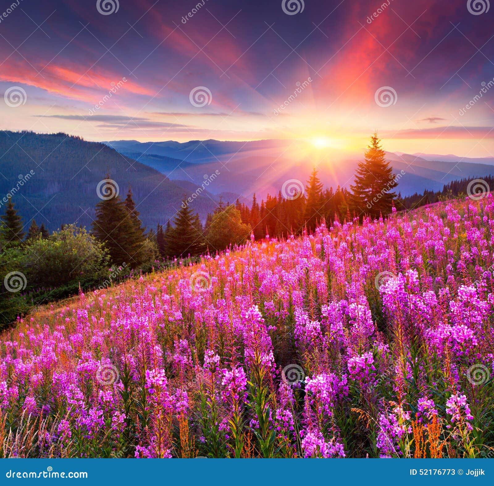 sunrise mountains flowers - photo #24