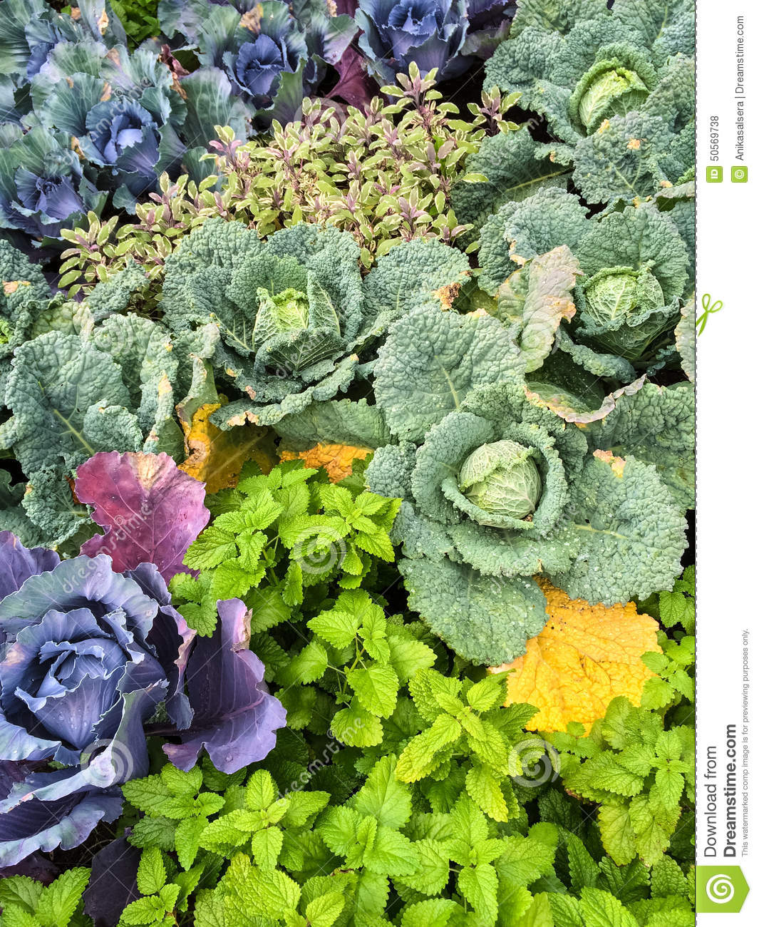 Colorful Summer Vegetable Garden Stock PhotoImage 50569738