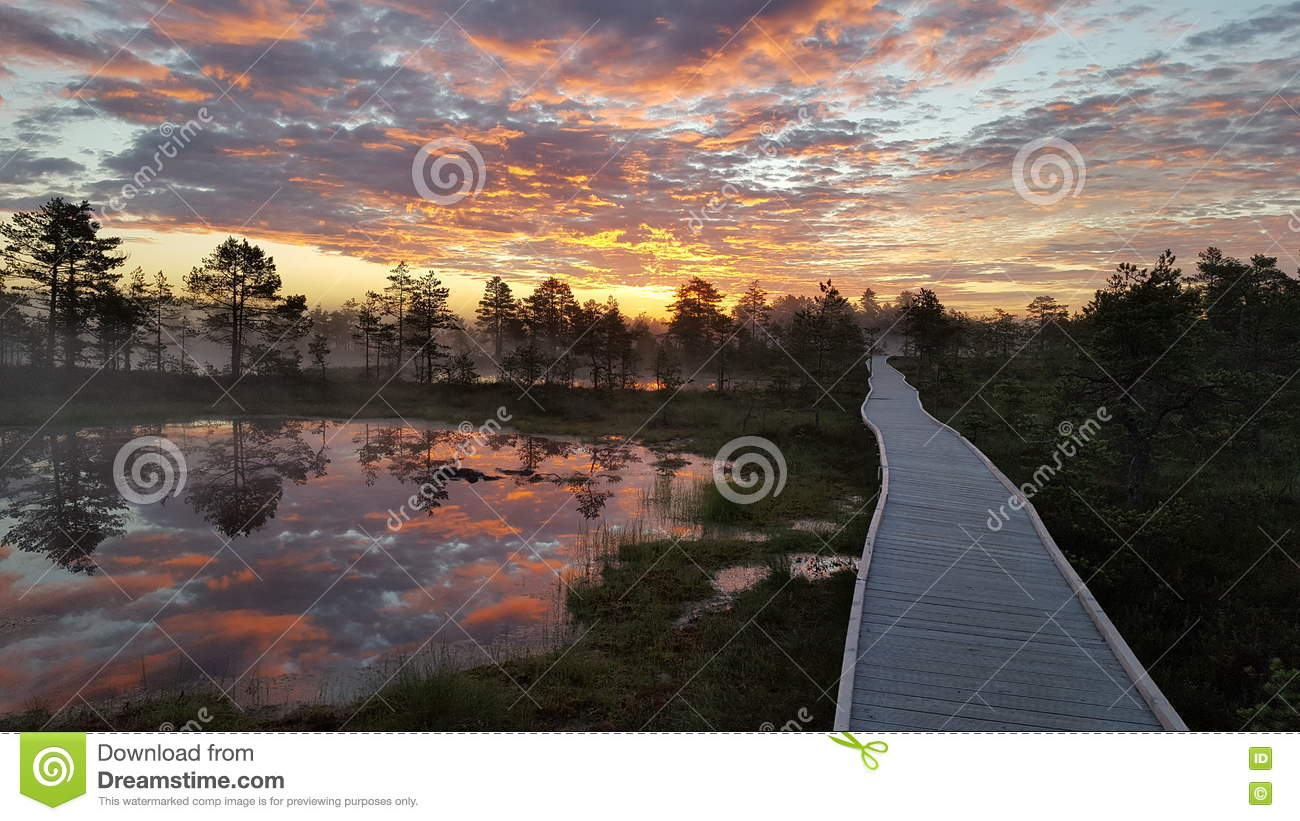 Colorful sunrise in the bog