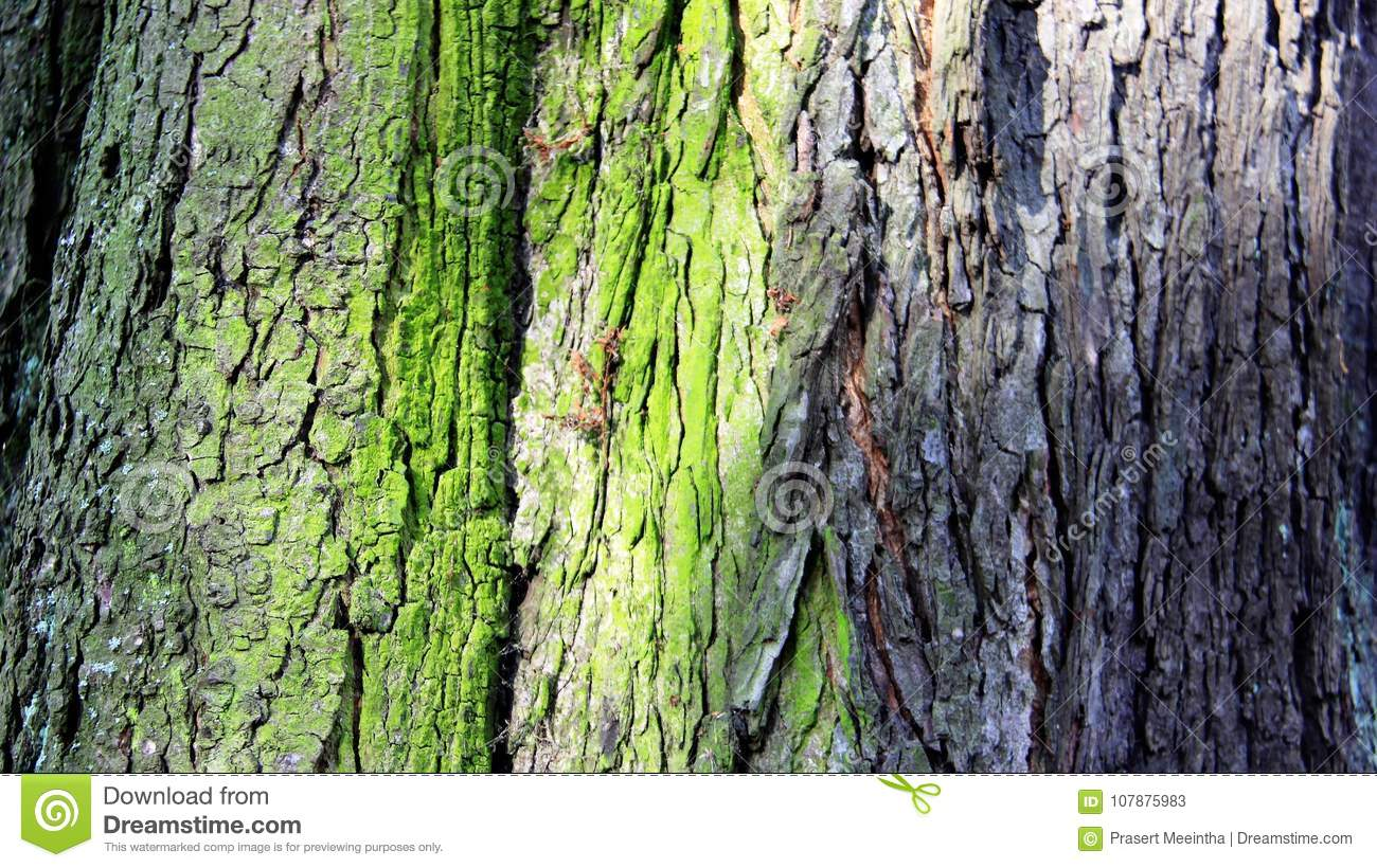 Colorful Of Tree Bark stock image. Image of sunlight - 107875983