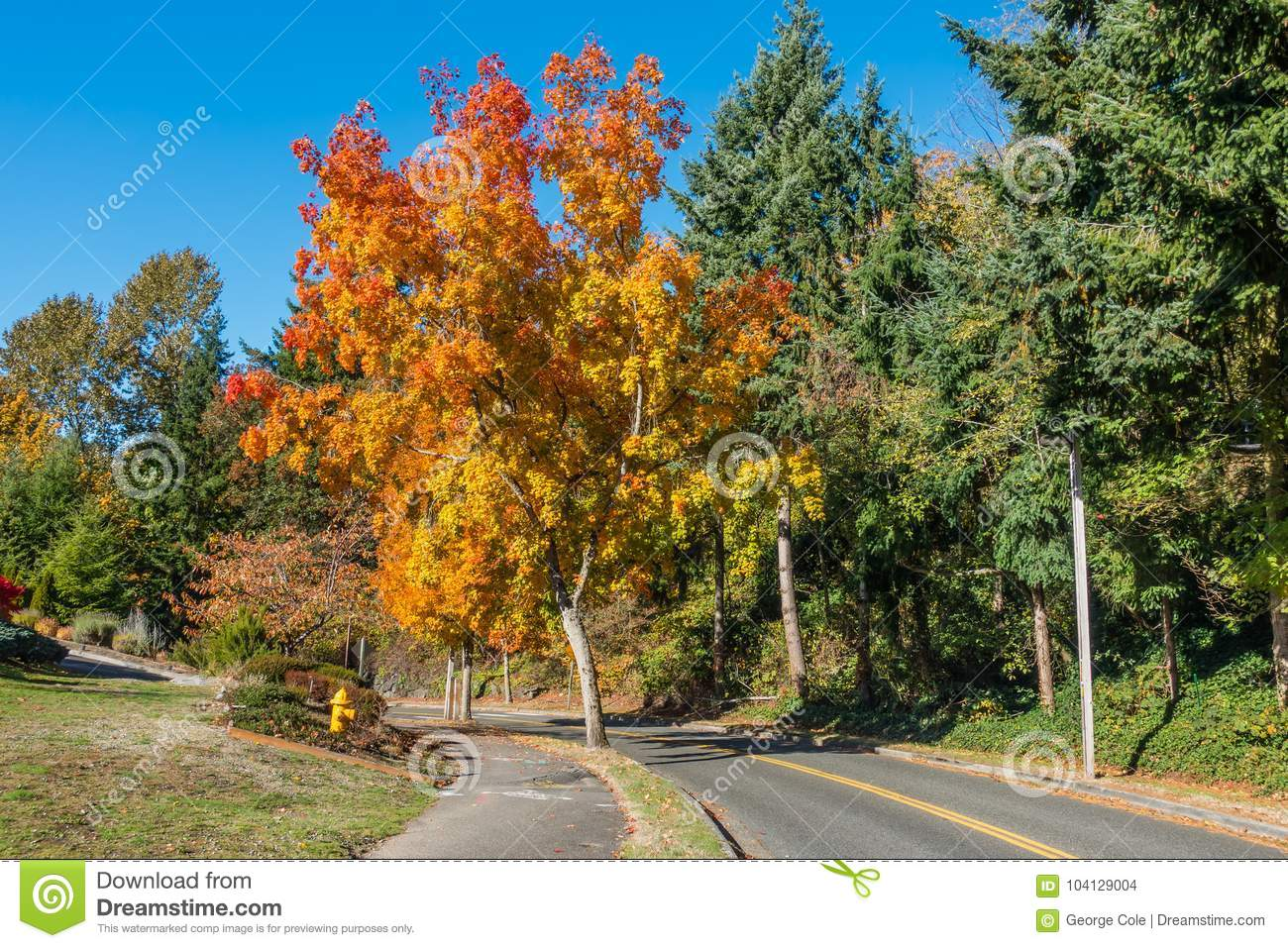 Colorful tree on street stock photo image of colorful for Colors that pop out