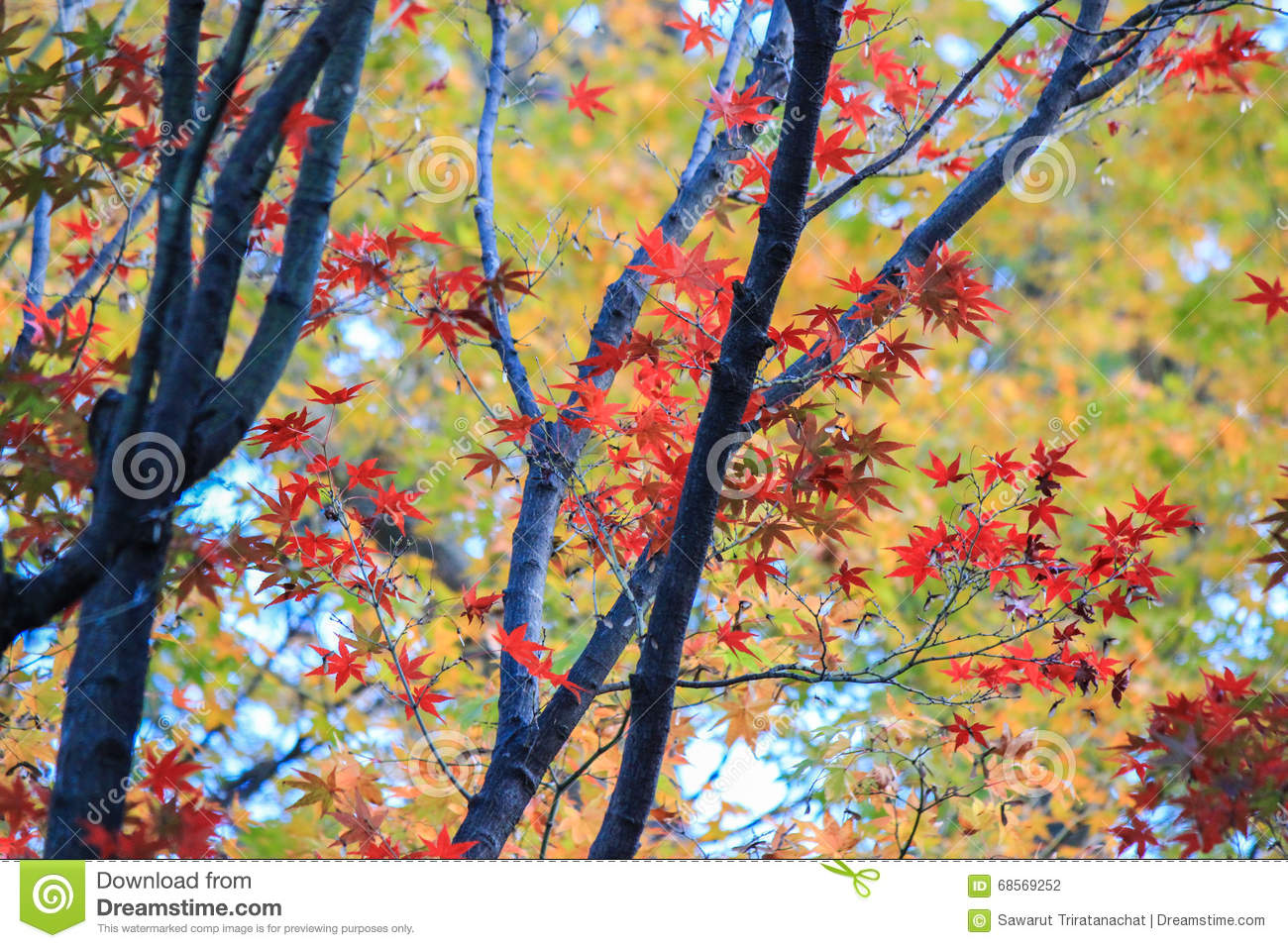 Colorful trees in autumn period