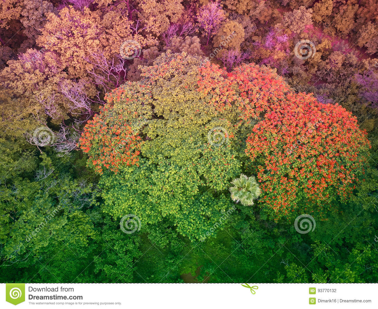 Colorful Trees In Central America Stock Photo - Image of orange ...