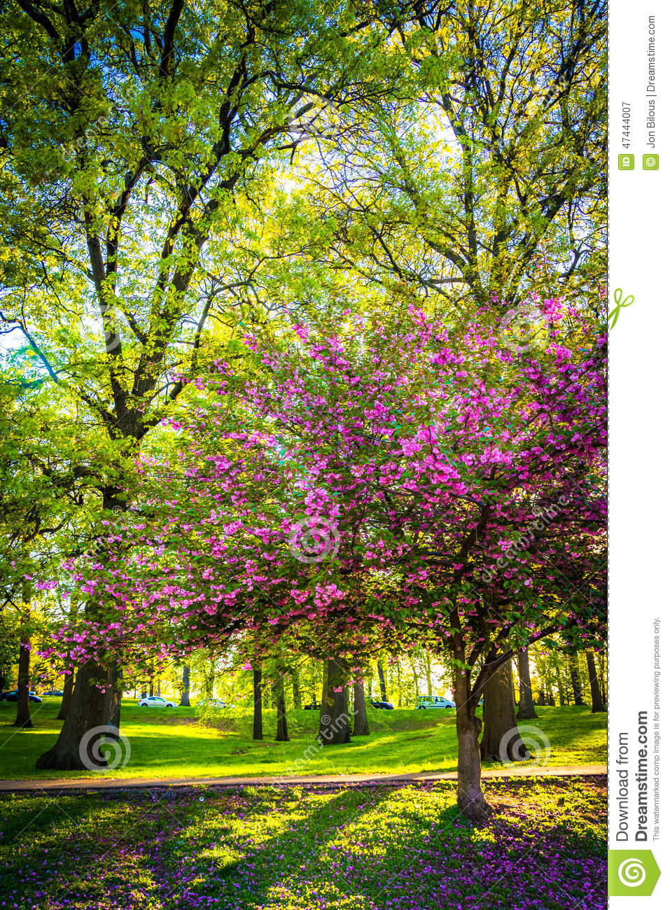 Colorful Trees In Druid Hill Park, Baltimore, Maryland. Stock Image ...