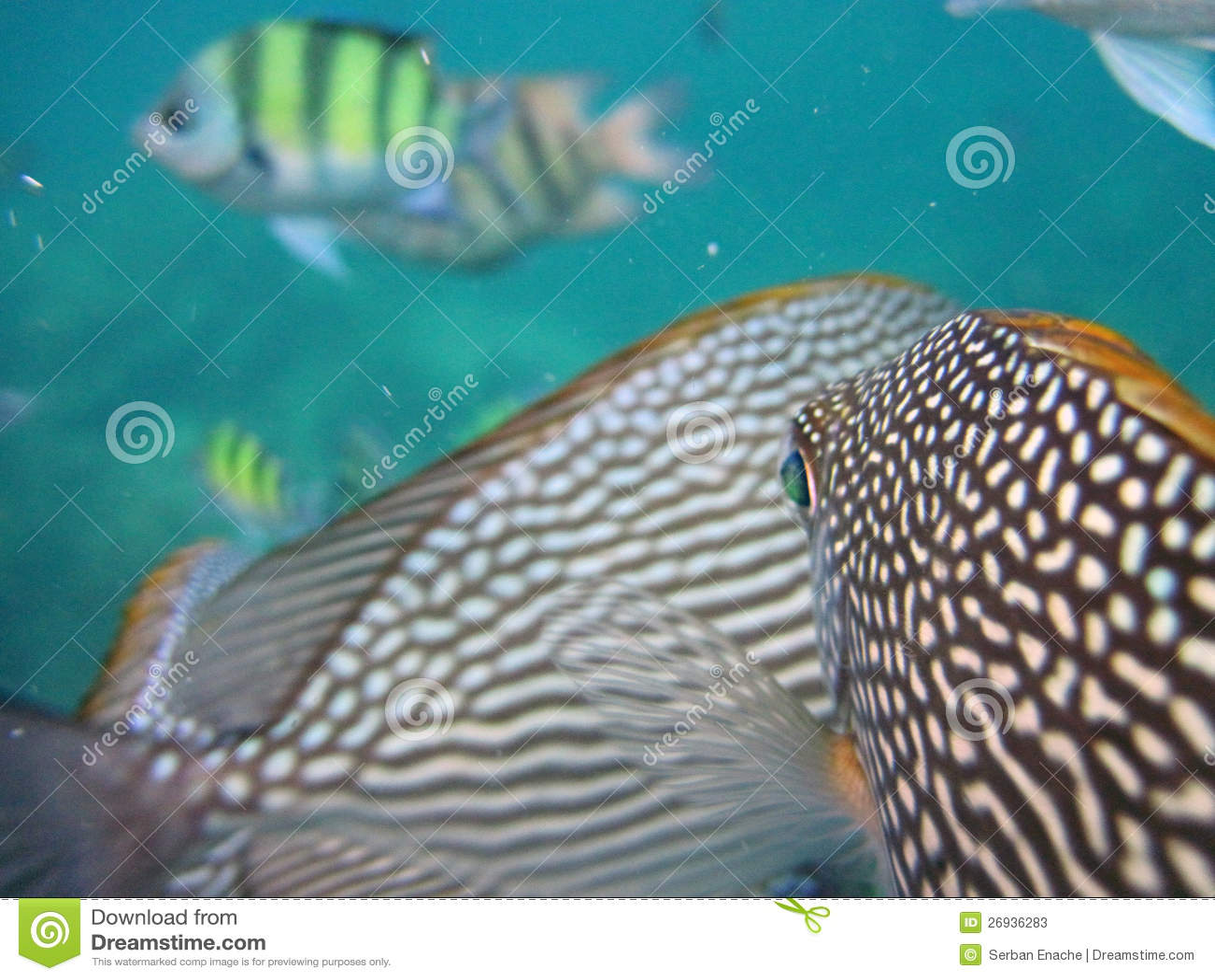 Pin Unique Tropical Fish Modern Bowls on Pinterest