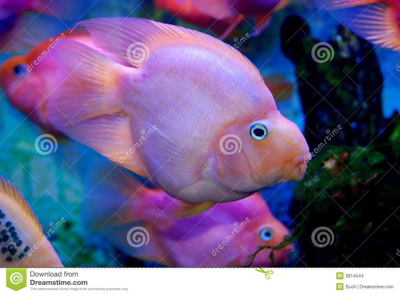 Colorful Tropical Fish Stock Images Image 3814544