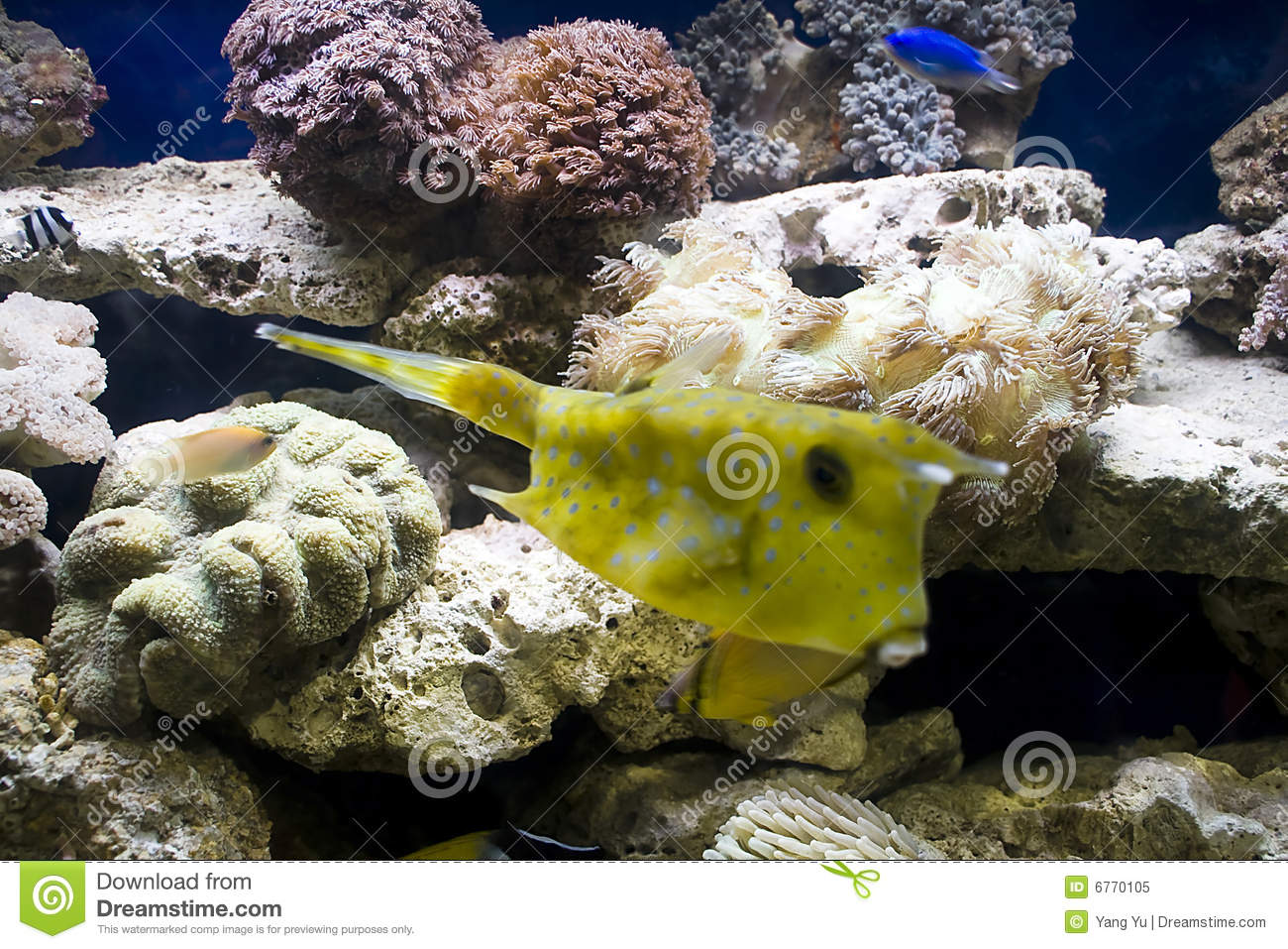 Colorful Tropical Fish Royalty Free Stock Photo Image