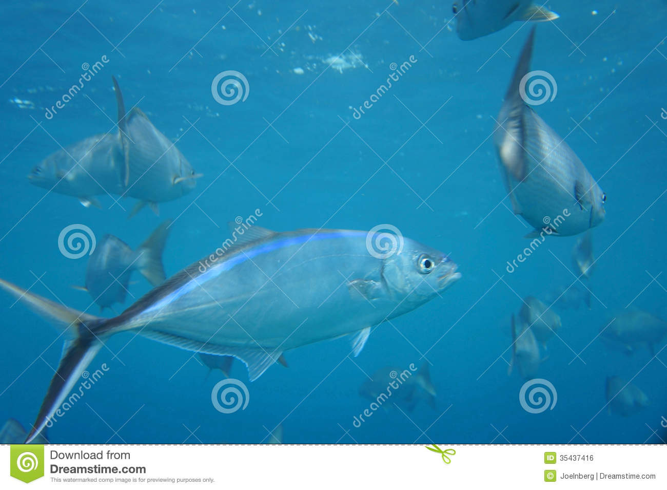 Colorful Tropical Fish Royalty Free Stock Image Image