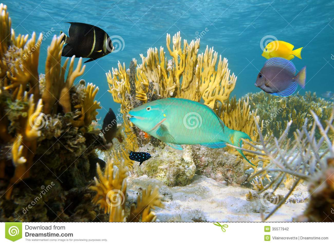Colorful tropical fish in coral reef stock photo image for Colorful tropical fish