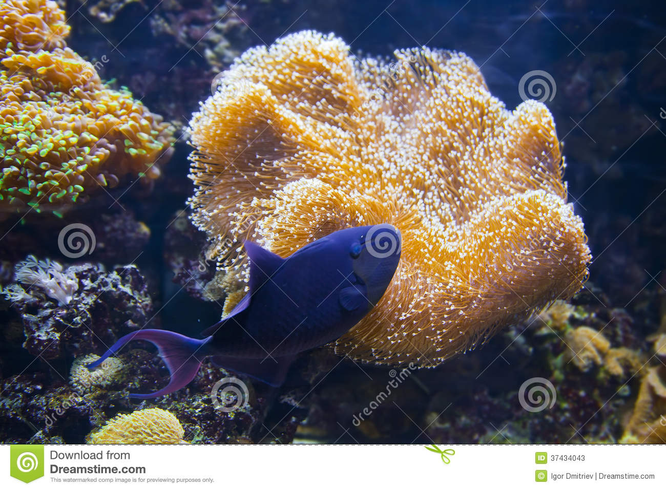 Colorful tropical fish under water for Colorful tropical fish