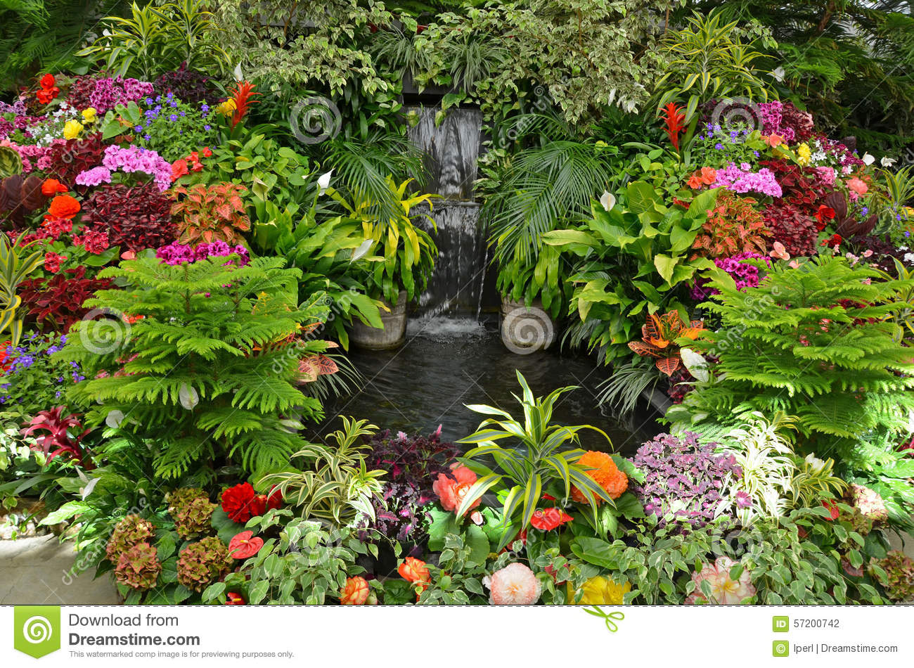 Colorful Tropical Garden Stock Photo Image Of Tropical