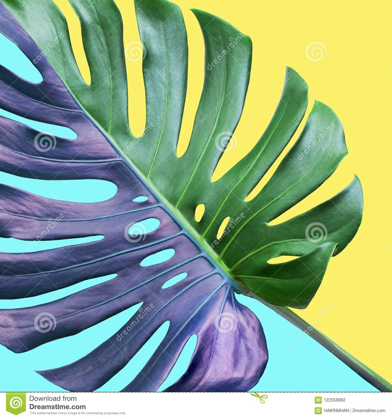 Colorful Of Tropical Monstera Leaves On Pastel Background