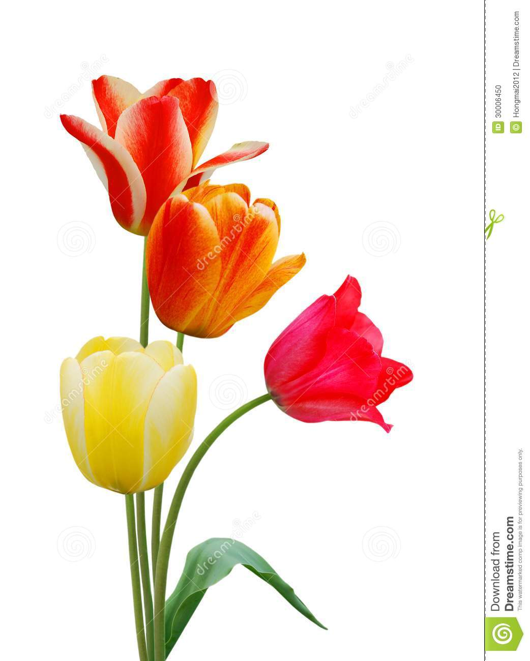colorful tulip flowers - photo #43