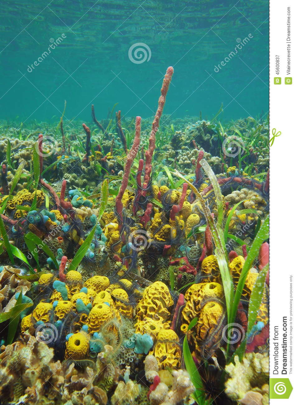Underwater Scenery Colorful Marine Life Coral Reef Stock ... |Colorful Underwater Life