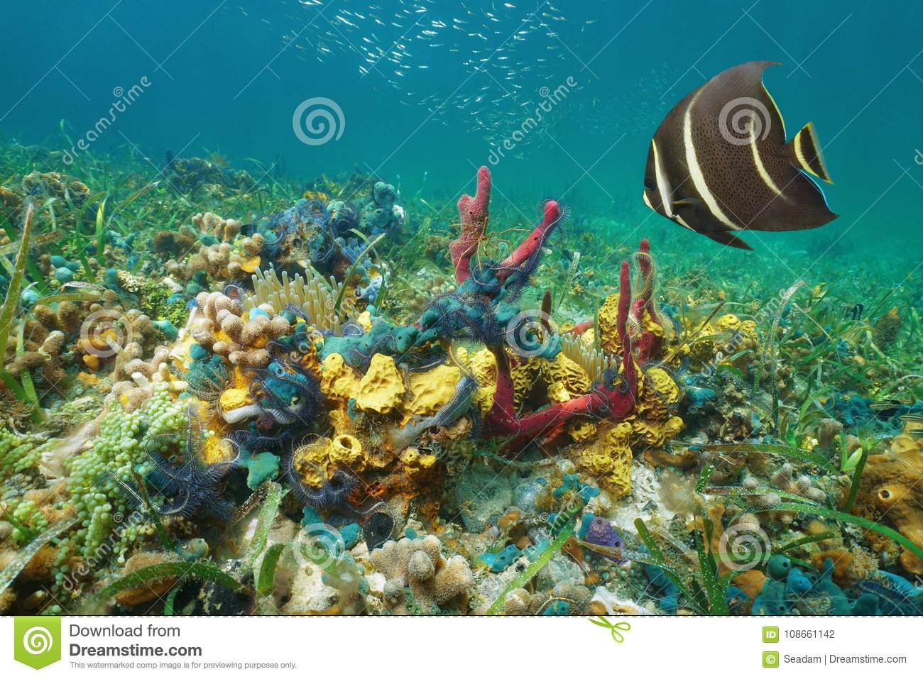 Underwater life. Coral reef, fish, colorful plants in ... |Colorful Underwater Life