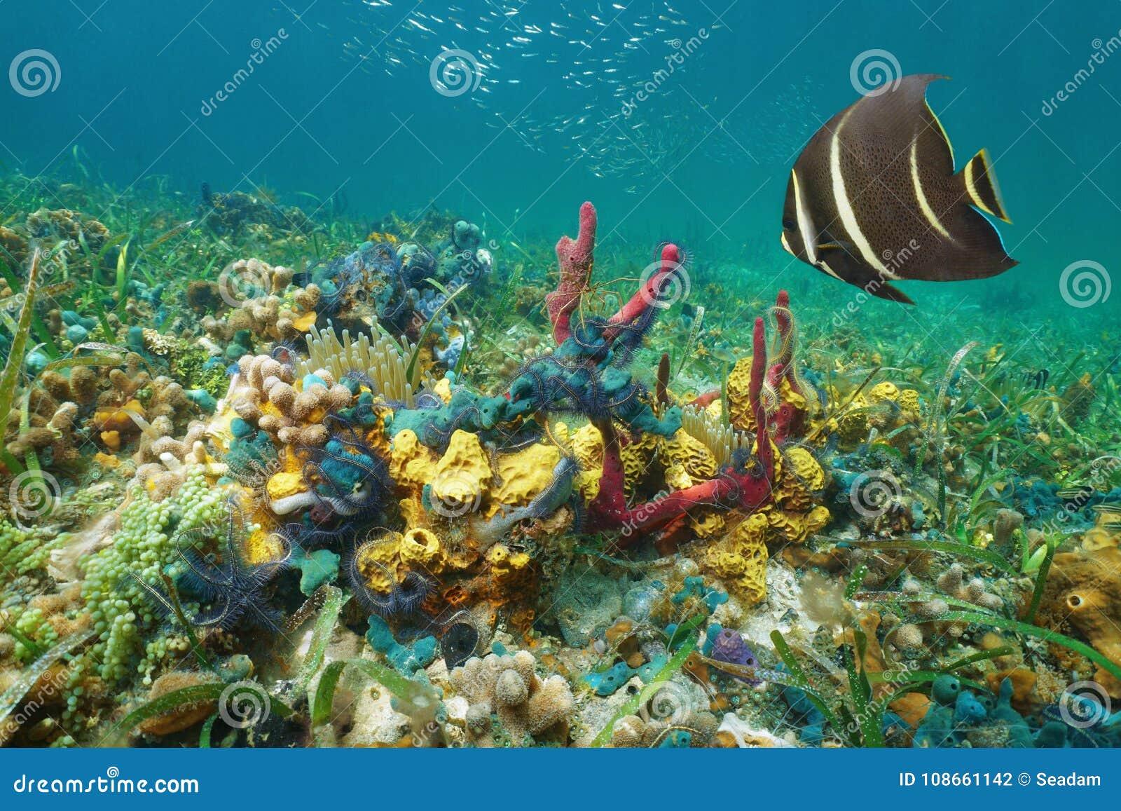 Caribbean Sea Animal Life: Colorful Underwater Marine Life Caribbean Sea Stock Photo